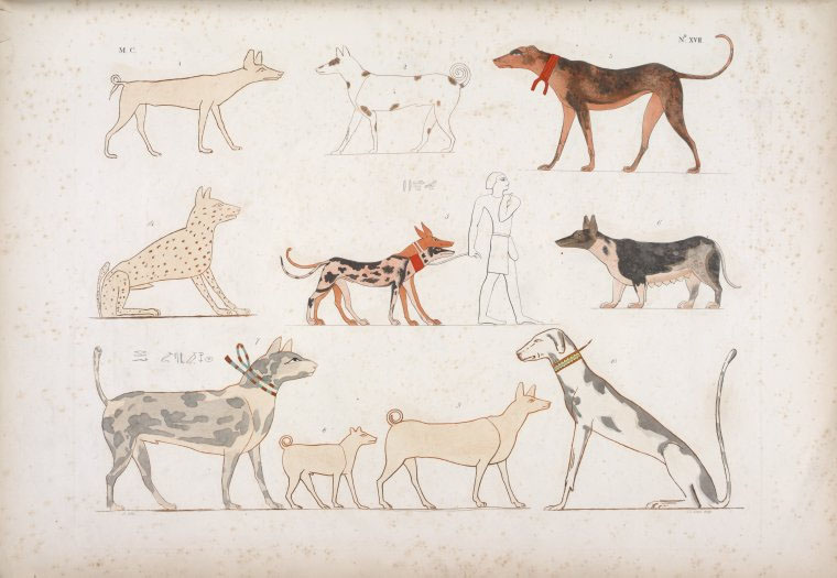 What Dog Breed Did The Egyptian